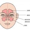 サイナス 副鼻腔