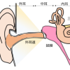 耳管 pharyngotympanic tube, auditory tube